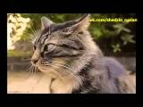 Джентльмены удачи - Евгений Леонов (кот)