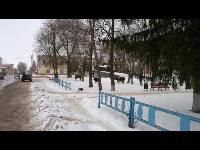 Болховские бродячие коровы 22.12.16