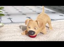 An Animated Story of a boy who hates his disabled dog