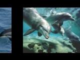 Дельфинёнок Шан-хай