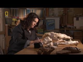 Доисторические хищники — Хищные птицы ящеры Документальные фильмы Nat Geo Wild