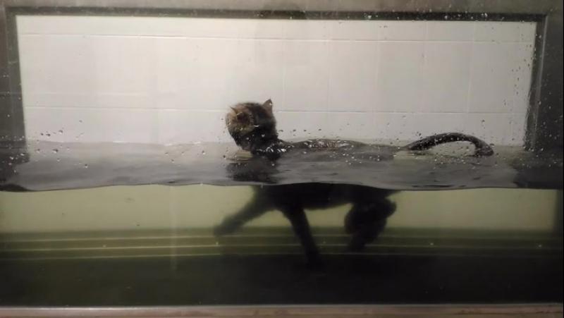 ЦВНиРЖ кот Марсик на водно-беговой дорожке