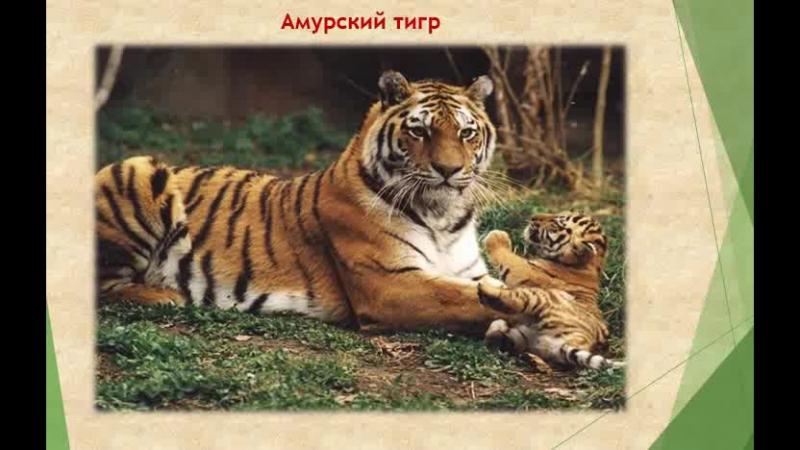 Илья Федичев - 10 животных из Красной книги России
