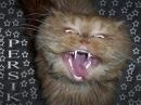 Говорящие коты (Talking cats) Смешные коты Приколы с кошками и котами - Funny cats