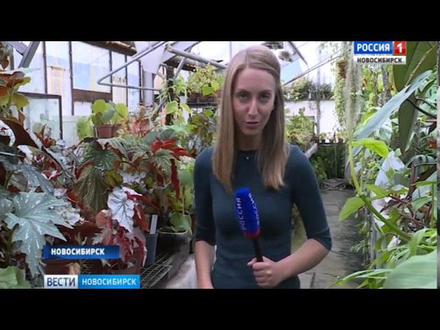 Новосибирские ученые используют бегонию для борьбы с микробами