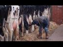 Про молочную индустрию за 5 мин