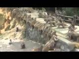 Macacos Brigando - Lado A vs Lado B - Baile de Briga