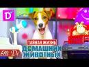 ПЕСНЯ ТАЙНАЯ ЖИЗНЬ ДОМАШНИХ ЖИВОТНЫХ СОБАКА ДЖИНА ПОЁТ Elli Di Собаки