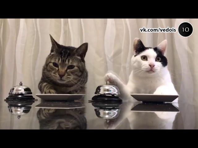 Веселая нарезка прикольных видео 2017. Ох, уж эти наши двуногие друзья!