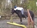 Видео ролики про лошадей. Смешные животные. Funny Horses. Смешные лошади