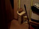 Когда кот пришёл домой набуханый