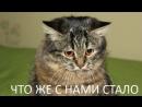 "7-3 Почему от палача не уходит жена ""Последний палач"", 2005"