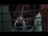 «Выбери меня». Людей поселили в клетки приюта для животных.