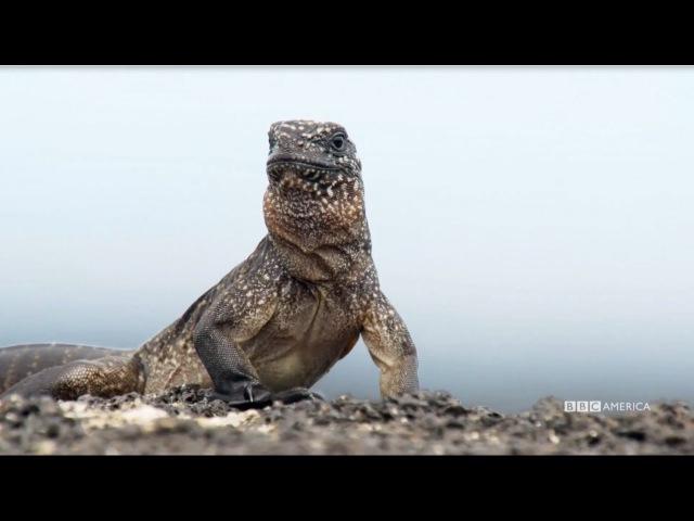 Блокбастер: Игуана против змей.