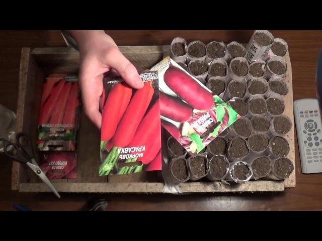 Посадка моркови и свеклы на рассаду Planting carrots and beet seedlings