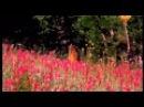 Пища Богов. Удивительные свойства трав (24.09.2013)