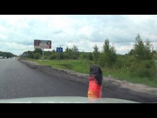 Maloye Polpino Малое Полпино Belye Berega Белые Берега E101 M3 Russia Россия 9.7.2016 189