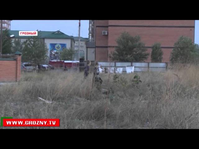 Новости • В Грозном в последнее время увеличилось количество бродячих собак