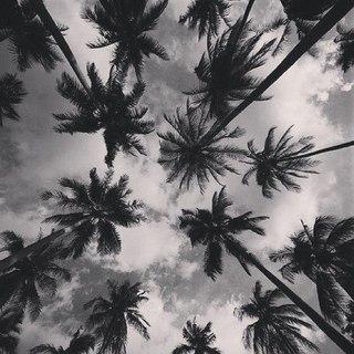 чёрно-белые рисунки фото