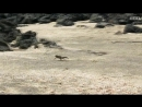Отрывок из фильма BBC Планета земля