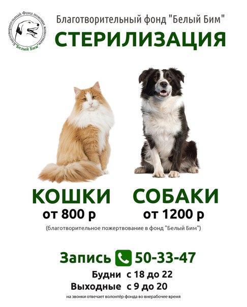 https://pp.userapi.com/c637123/v637123877/433a7/le3EA7bAGv4.jpg
