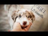 Lumos Solem Gogol - 1.5 month