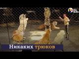 Эмоции животных, которые вышли на свободу из цирка Русские субтитры HD