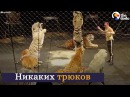 Эмоции животных которые вышли на свободу из цирка Русские субтитры HD
