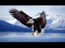 Дикая природа Аляски Животные Аляски Документальный фильм