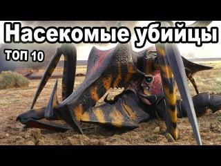 Топ 10 самых опасных насекомых в мире.  Укусы насекомых