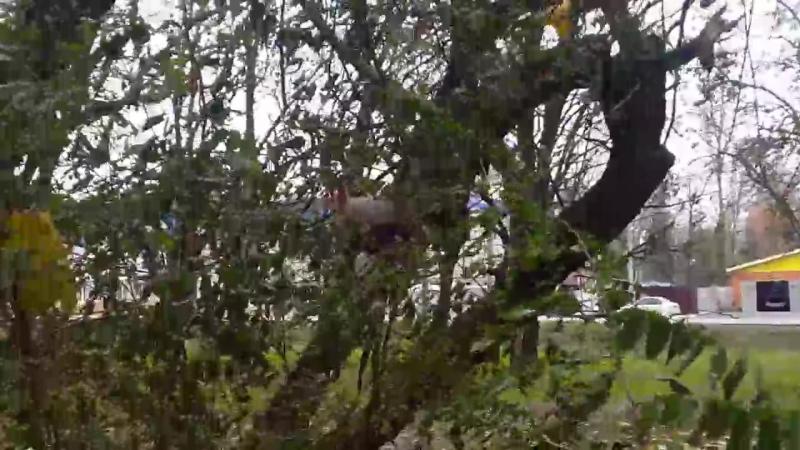 Белка крохотулька