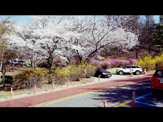 Sakura. Spring in Seoul, Korea / Сакура. Весна в Сеуле, Корея