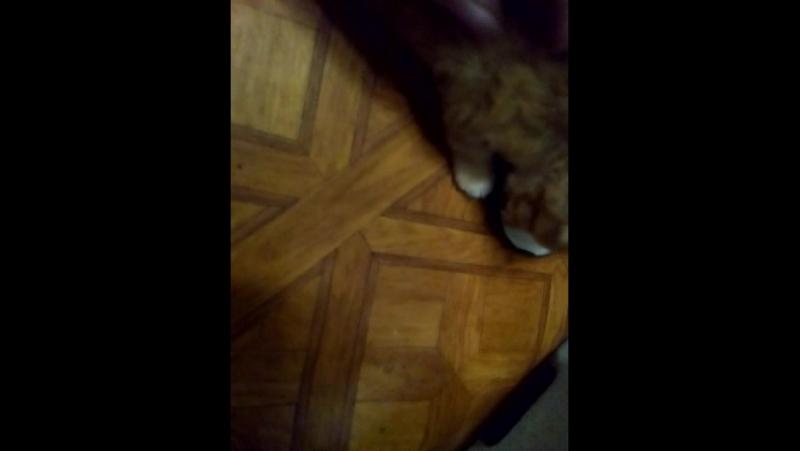 Котёнок по кличке Огнегрив