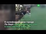 Полицейские спасли медвежонка, застрявшего в канистре