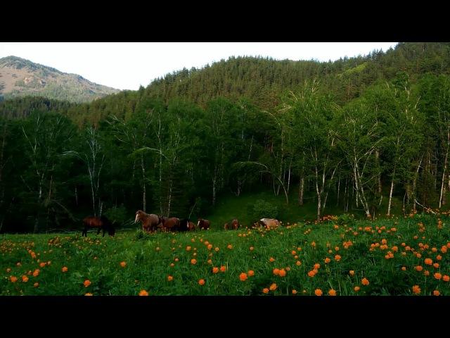 Майская роскошь Горного Алтая. / May luxury of the Altai Mountains.