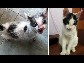Rescuing a terrified abandoned Kitten - The transformation will amaze you!