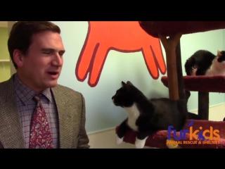 Малобюджетное смешное видео приюта для животных стало вирусом