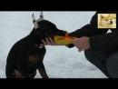 Дрессировка добермана. Игра со щенком