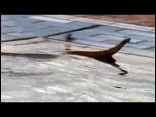 Красота змей - кобра, анаконда