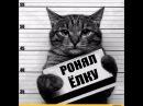 Приколы с котами смешные коты котики приколы про котов до слез смешные кошки луч...