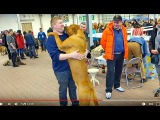 Собака - слон. ТОСА-ИНУ Исаму. Huge dogs Tosa Isamu. Dog - the elephant.