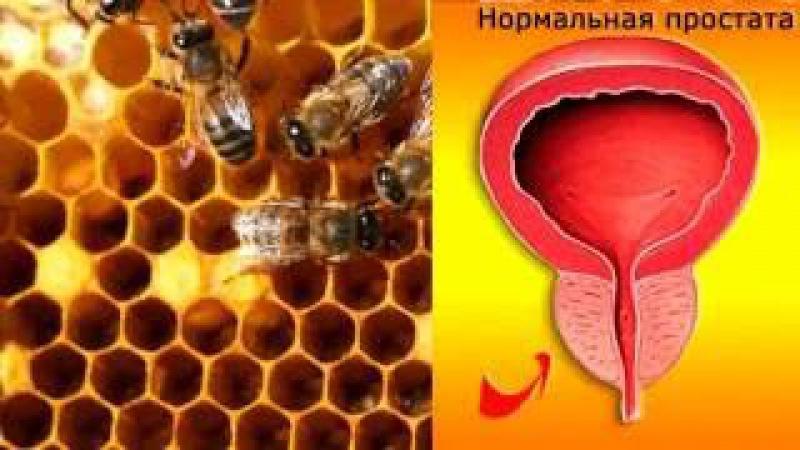 Пчелиная перга, рецепты лечения пергой