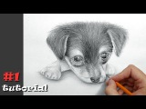 Как нарисовать собаку карандашом - поэтапный обучающий урок.