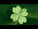 Подборка лучшего видео от optimistich no 5 Везунчики 100 го уровня
