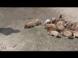 Прогулка по острову кроликов в Японии