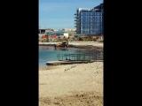 как загрязняли пляж АКвамарина водорослями и другим мусором