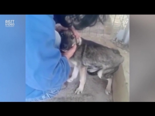 Собака после издевок людей первый раз контактирует с человеком