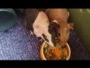 Лёлик и Болик кушают сухой корм. (21.07.17)