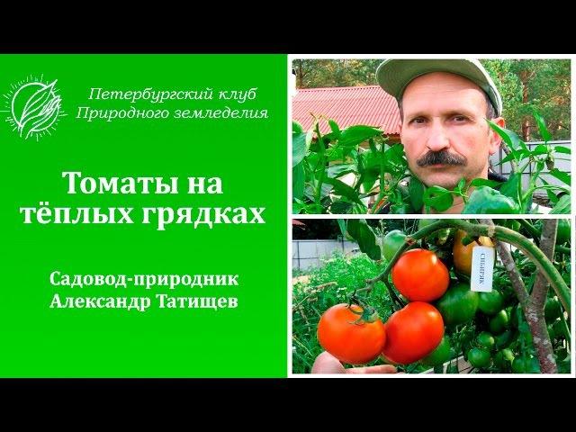 Томаты на огороде садовода-природника Александра Татищева