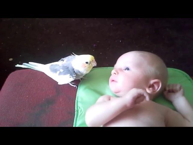 Когда ты столь прекрасен, что даже птицы поют для тебя